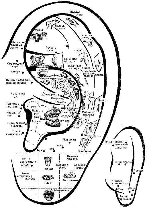 Наименования активных точек ушной раковины приведены по названию болезни того или иного органа или в соответствии с...