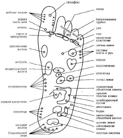 иллюстрация расположения внутренних органов человека: